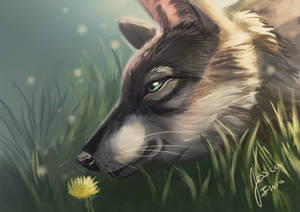 Wolf In Spring