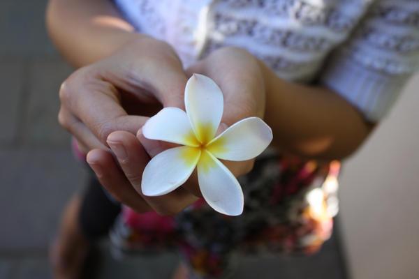 http://fc09.deviantart.net/fs71/i/2009/363/4/b/a_flower_for____by_dragonm5394.jpg