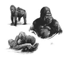 Quick sketches_Primates