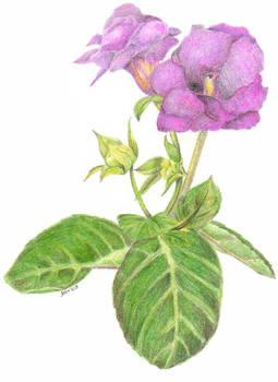 P Flor 03