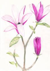 P Flor 10