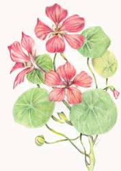 P Flor 11