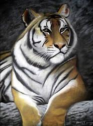 P Desenho Tigre