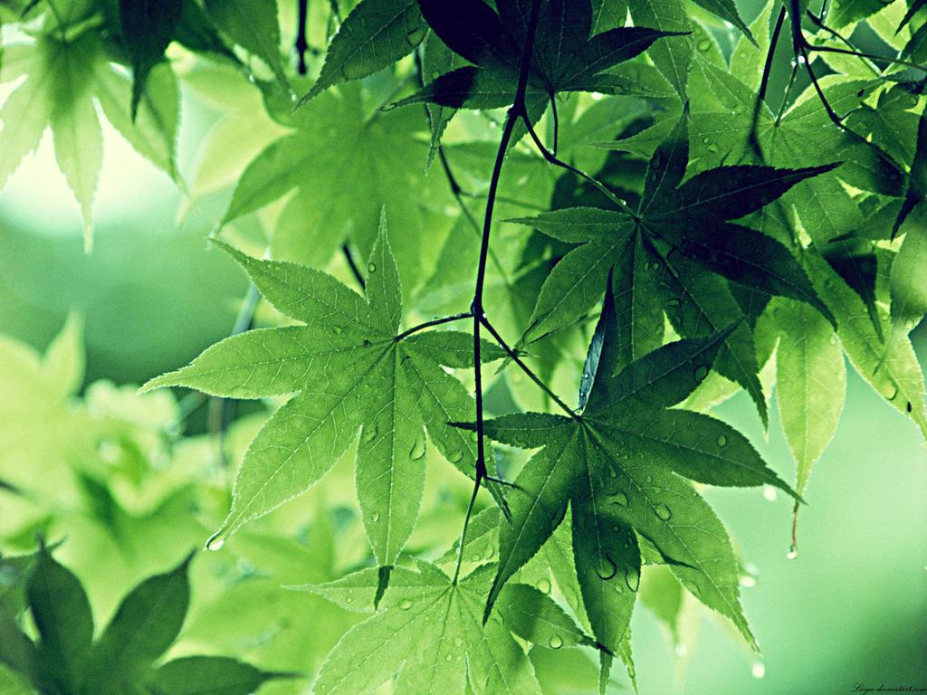 Green Leaves by Lileya