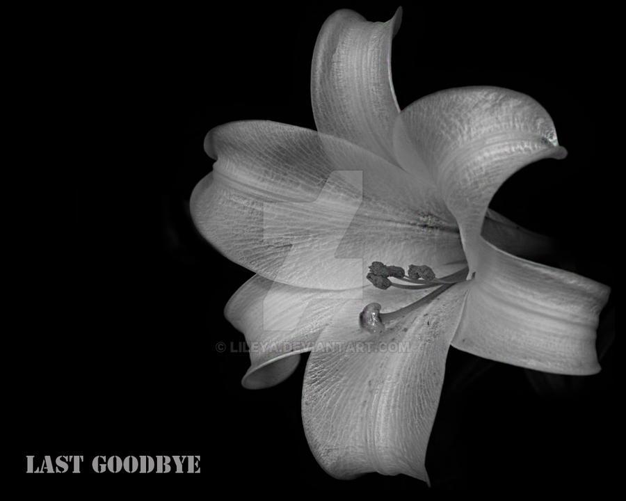 last goodbye by Lileya