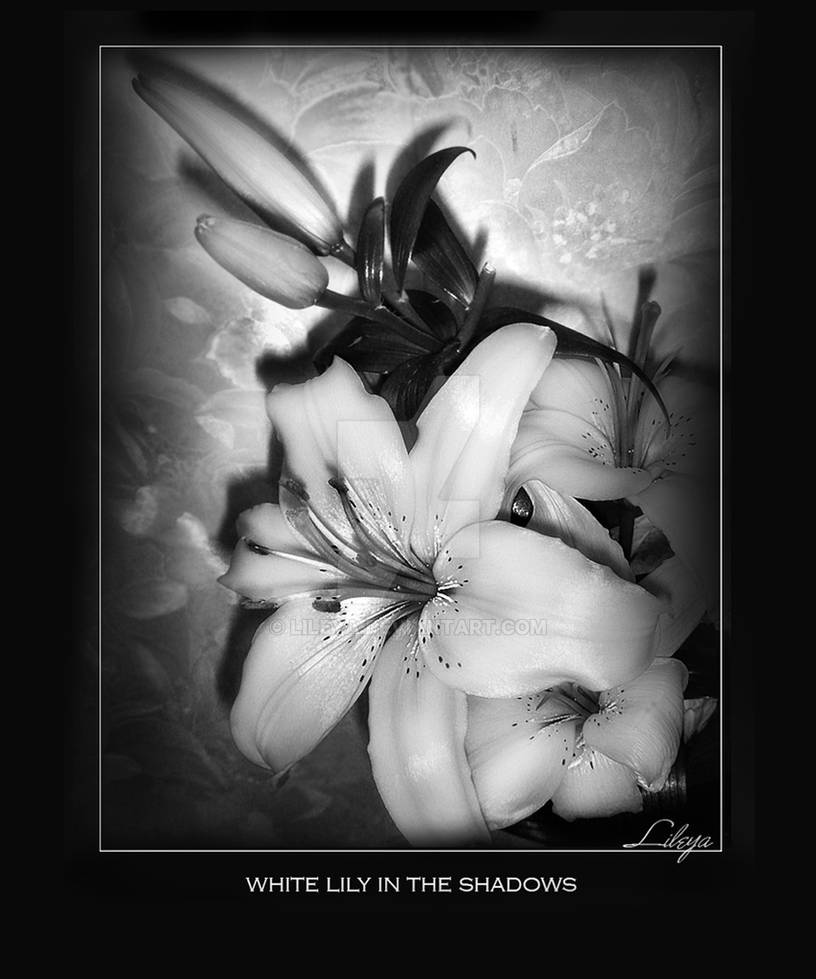 White Lily in the Shadows