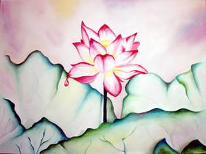 Lotus Sky