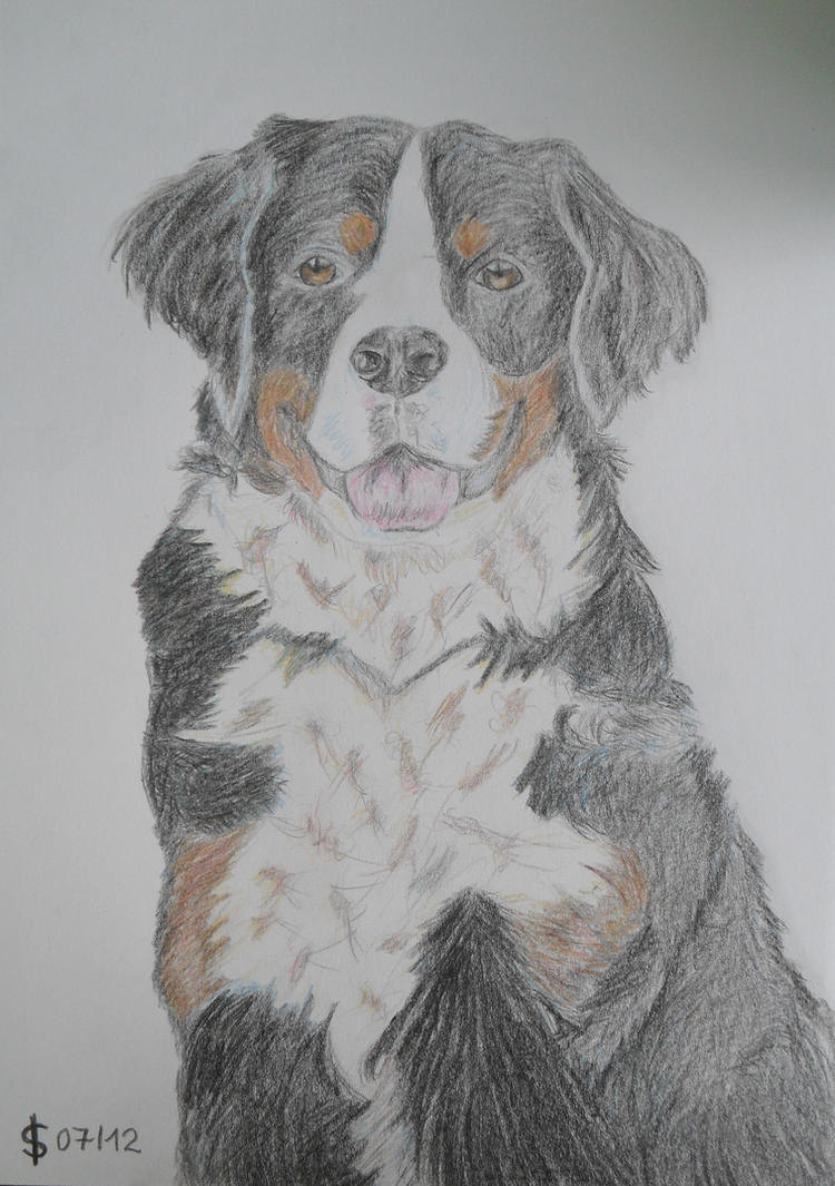 Bernese Mountain Dog Drawing By KathieProduction On DeviantArt