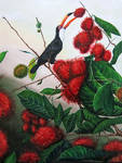 Toucan and Rambutans