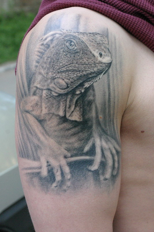 iguana by tauart