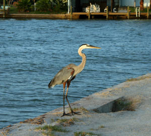 Rockport, TX - Crane 2