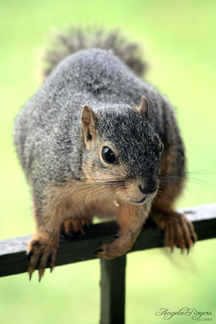 Outdoor Life - Squirrel 1 by policegirl01