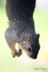 Outdoor Life - Squirrel 2 by policegirl01