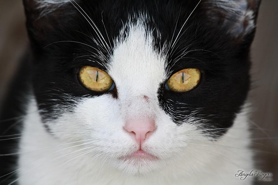 Outdoor Life - Cat 1 by policegirl01