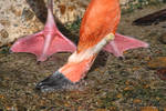 Flamingo - Gladys Porter Zoo by policegirl01