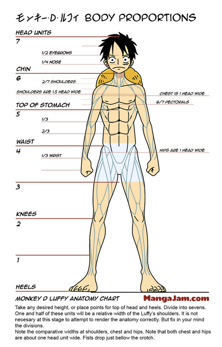 Luffy Body Anatomy Proportions By Howtodrawmanga3d On Deviantart