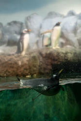 Penguins by oodelaly