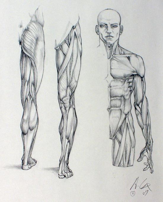 anatomy 01 by andrewcox