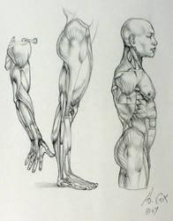 Anatomy 03 by andrewcox