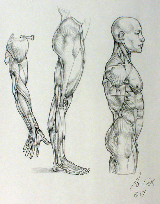 Anatomy 03 by andrewcox