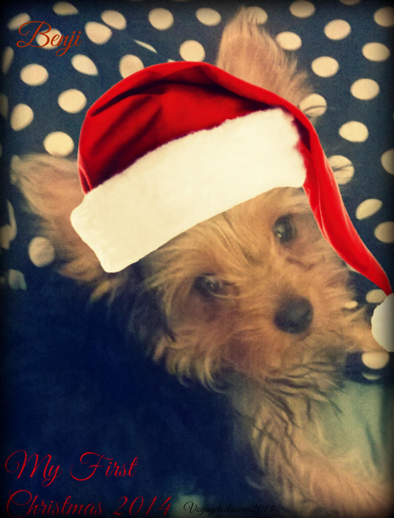 Benji's first Christmas by VoyagetoDiscover2013