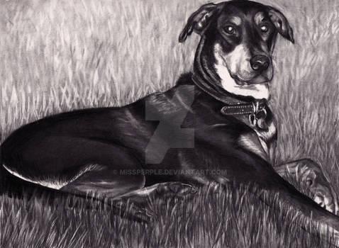 Dog Memorial Portrait Commission - Thor
