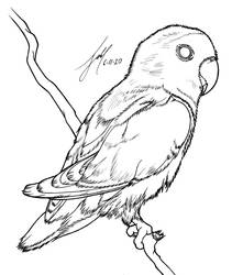 Lovebird - Lineart
