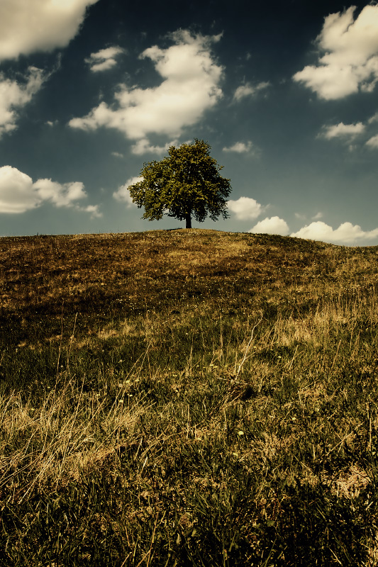 King of the Hill King_of_the_Hill_by_n0v1ce