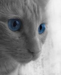 the blue dreamer by monster242