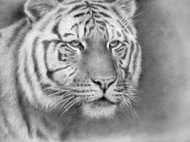 ,,Tiger tiger ... '' by monster242