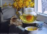 Forsythia tea by SunnySpring