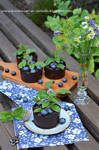 Chocolate flowerpots by SunnySpring
