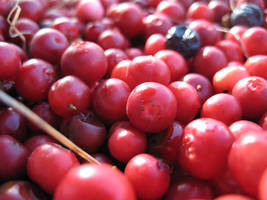 fruit by memysandi