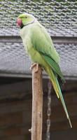 Red beak, green body by DevilKaito