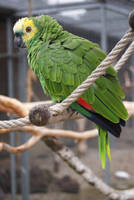 green parrot by DevilKaito