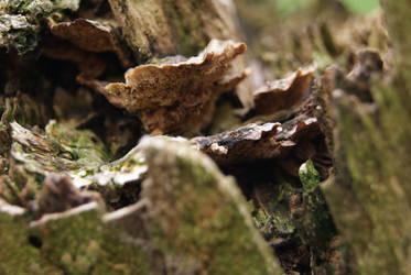 tree fungus by DevilKaito