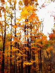 Southern Appalachia in Autumn