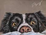 Sybil the Collie Dog
