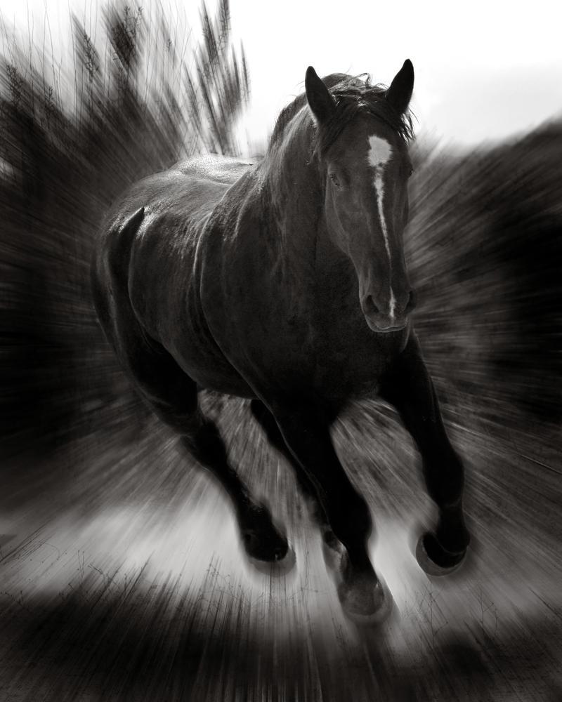 Big Black Horse by Photodeb