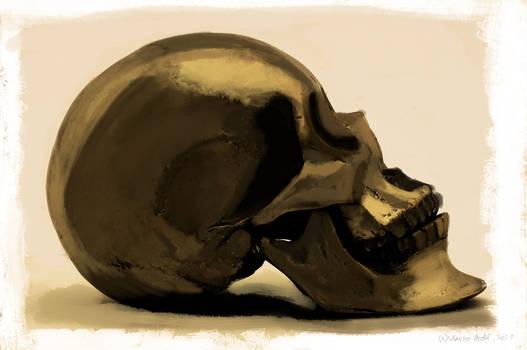 still life, skull