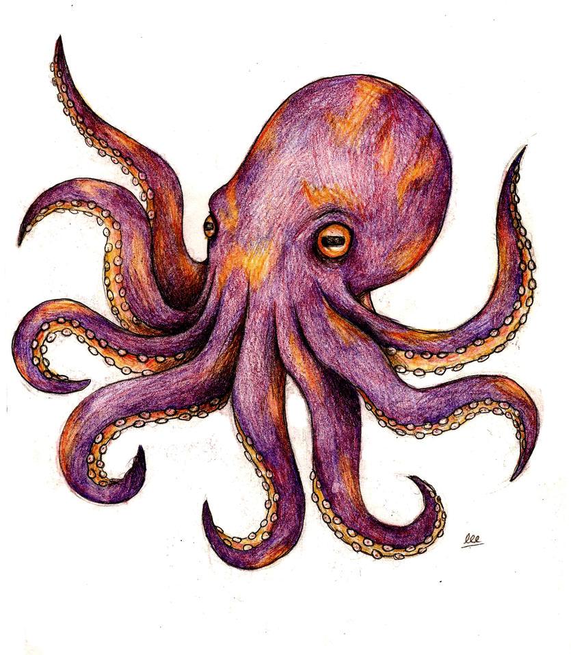 kraken-tattoo-drawing