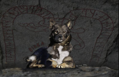 Birka, Lapsk vallhund (hearding dog) by BasseBlues