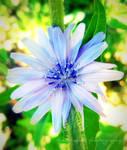 Flower Series 39