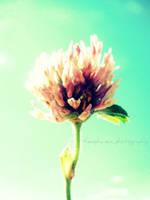 Flower Series 42 by KespeadooksitAgain