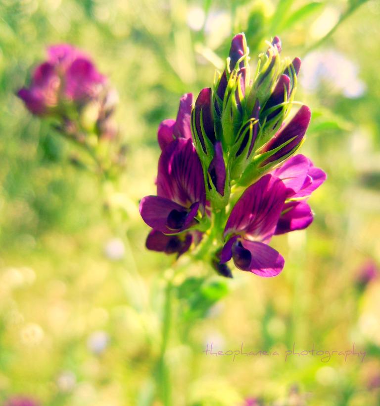 Flower Series 37 by KespeadooksitAgain