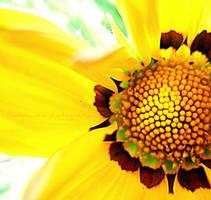 Sun Spot by KespeadooksitAgain