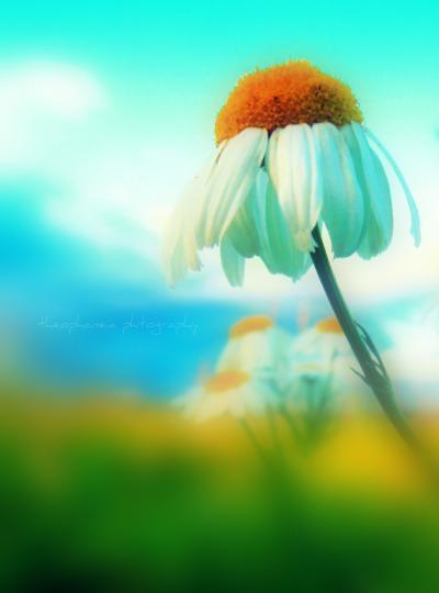 Flower by KespeadooksitAgain