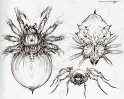 Spider Concepts