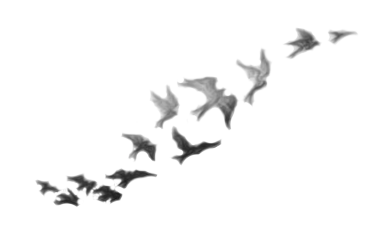 Demi Lovato Birds Tattoo PNG by rainofsparks