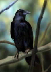 Crow by MindGem